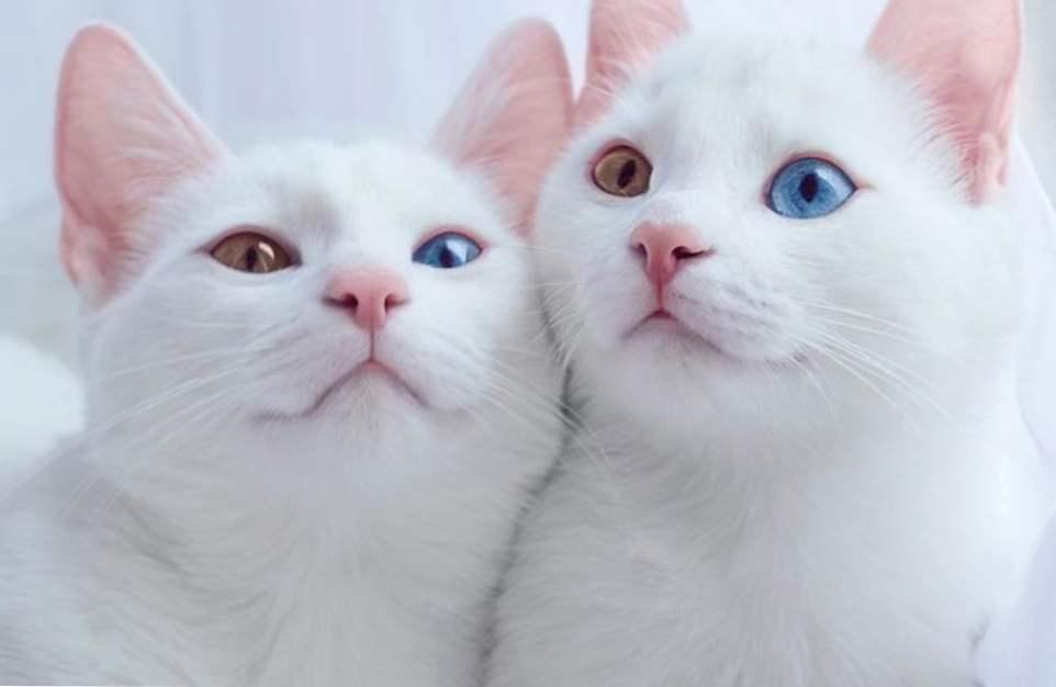 usluga upoznavanja mačaka