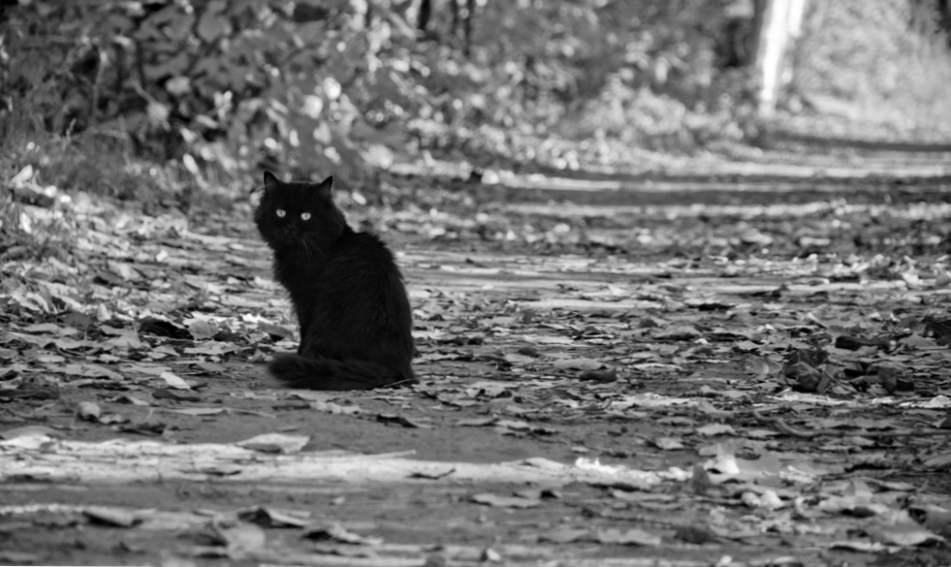 crna i meksička maca stare crne mame maca